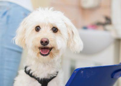 Microcip si pasaport canin - cabinet veterinar in Navodari - CertoVet