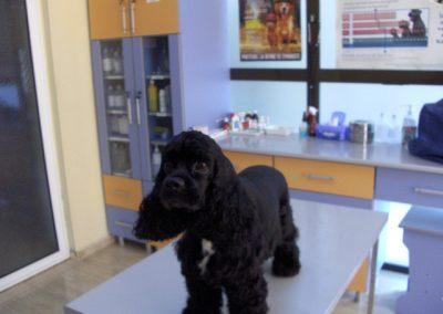 beauty-dupa - frizerie canina in Navodari - CertoVet.ro