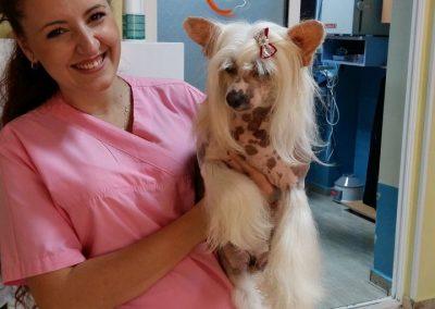 frizerie canina - cabinet veterinar in Navodari - CertoVet.ro 00001