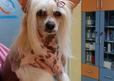 frizerie canina - cabinet veterinar in Navodari - CertoVet.ro 00002