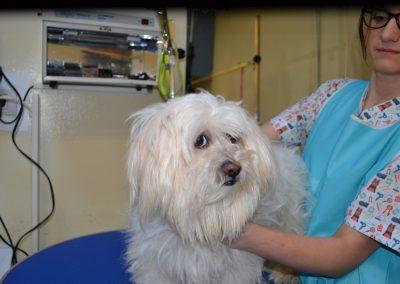 frizerie canina in Navodari - CertoVet.ro 005