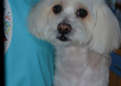 frizerie canina in Navodari - CertoVet.ro 008