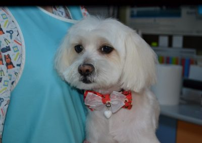 frizerie canina in Navodari - CertoVet.ro 010