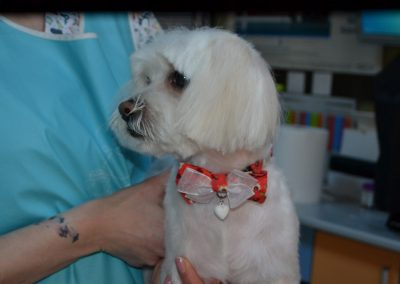 frizerie canina in Navodari - CertoVet.ro 011