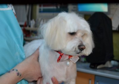frizerie canina in Navodari - CertoVet.ro 012