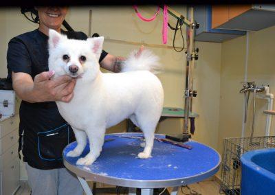 frizerie canina in Navodari - CertoVet.ro 014