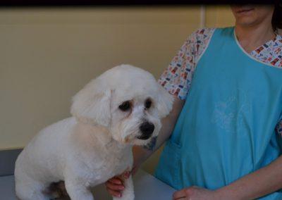 frizerie canina in Navodari - CertoVet.ro 023