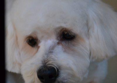 frizerie canina in Navodari - CertoVet.ro 025