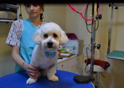 frizerie canina in Navodari - CertoVet.ro 027