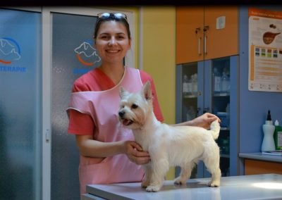 frizerie canina in Navodari - CertoVet.ro 032