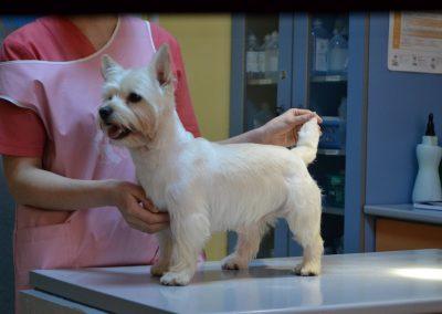 frizerie canina in Navodari - CertoVet.ro 033