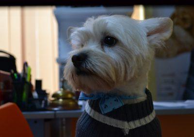 frizerie canina in Navodari - CertoVet.ro 037