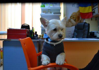 frizerie canina in Navodari - CertoVet.ro 038