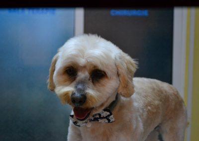 frizerie canina in Navodari - CertoVet.ro 040