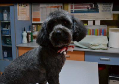 frizerie canina in Navodari - CertoVet.ro 048