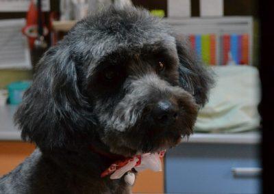 frizerie canina in Navodari - CertoVet.ro 050