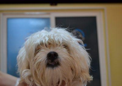 frizerie canina in Navodari - CertoVet.ro 055