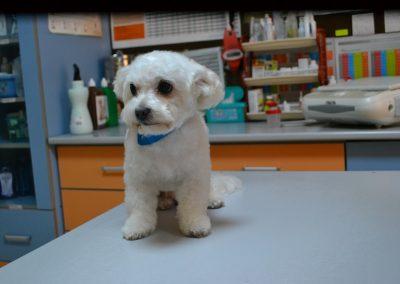 frizerie canina in Navodari - CertoVet.ro 060