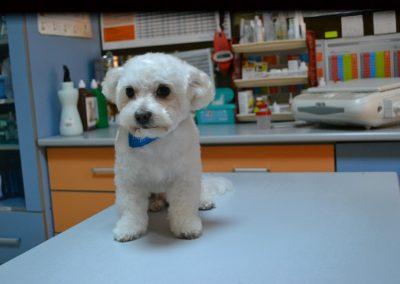 frizerie canina in Navodari - CertoVet.ro 061