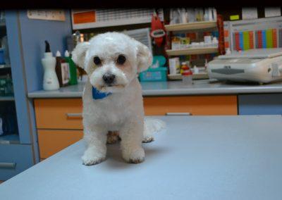 frizerie canina in Navodari - CertoVet.ro 062