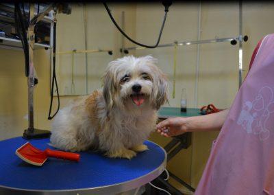 frizerie canina in Navodari - CertoVet.ro 071