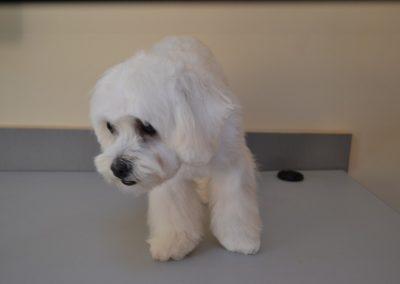 frizerie canina in Navodari - CertoVet.ro 074