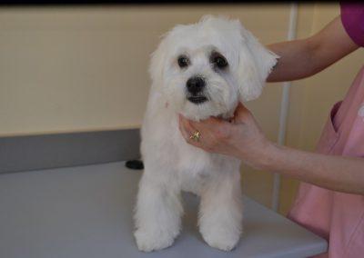 frizerie canina in Navodari - CertoVet.ro 076