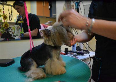 frizerie canina in Navodari - CertoVet.ro 079