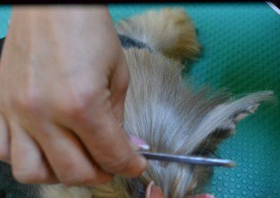 frizerie canina in Navodari - CertoVet.ro 083