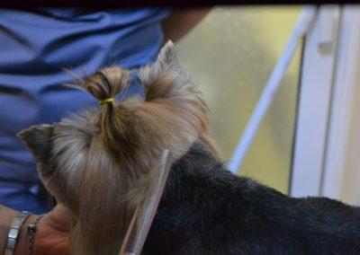 frizerie canina in Navodari - CertoVet.ro 087