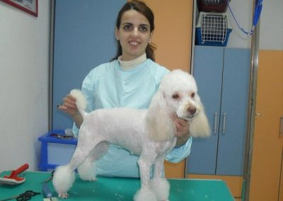 frizerie2 - frizerie canina in Navodari - CertoVet.ro