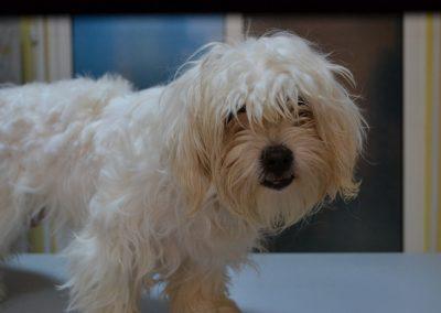 frizerie canina in Navodari - CertoVet.ro 056