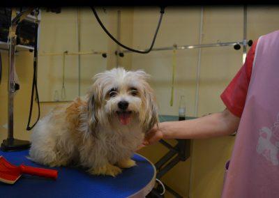 frizerie canina in Navodari - CertoVet.ro 070