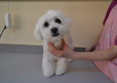 frizerie canina in Navodari - CertoVet.ro 072