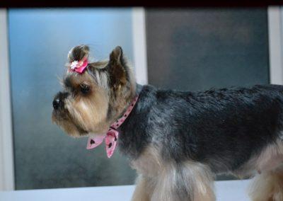 frizerie canina in Navodari - CertoVet.ro 090